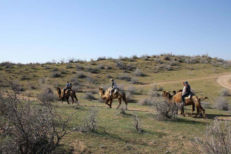 Kamelenreiten auf der Wüste Kysylkum